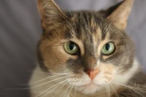 murphy cat  3-31-2008 5-34-50 PM