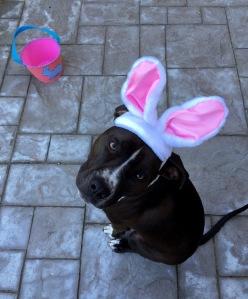 Kaylee bunny